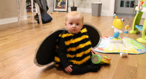 bee fur fabric