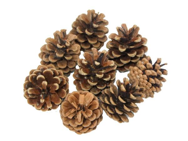 craft-pine-cones